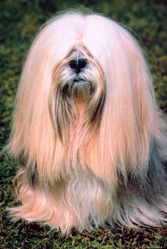 Hairy Dogs Breeds