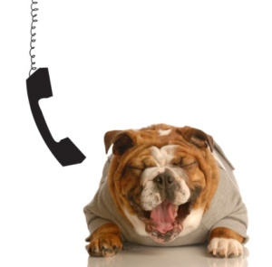 dog barks talking on phone