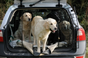 dogs_in_back_of_car_header