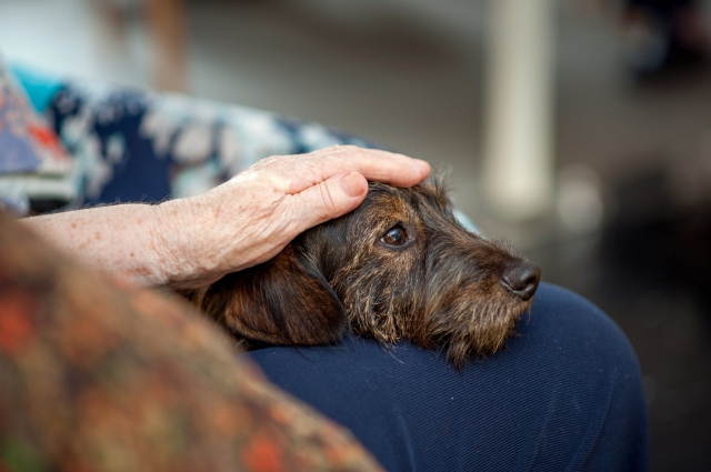 Senior Woman In The Retirement Community Enjoy The Visit Of Her Dog